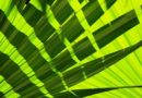 DE udspil: Ny og ambitiøs forskningspolitik